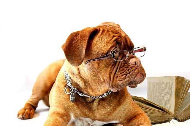 reading glasses dog