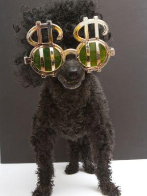 black dog wearing $ sunglasses